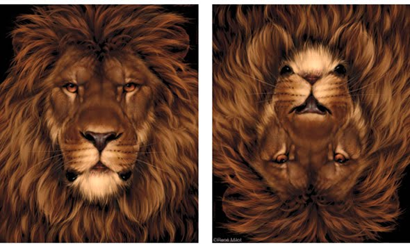 lion-mouse-optical-illusion