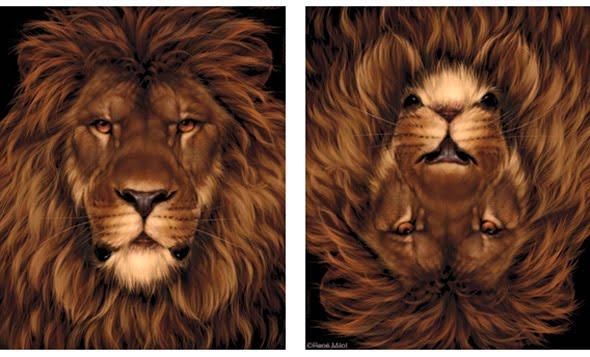 lion-mouse-optical-illusion